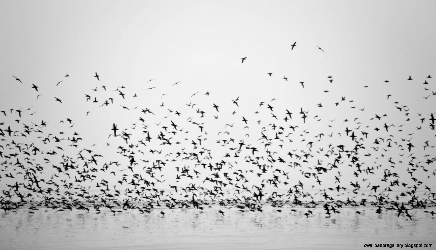 Bird Wallpaper Black And White | Wallpapers Gallery