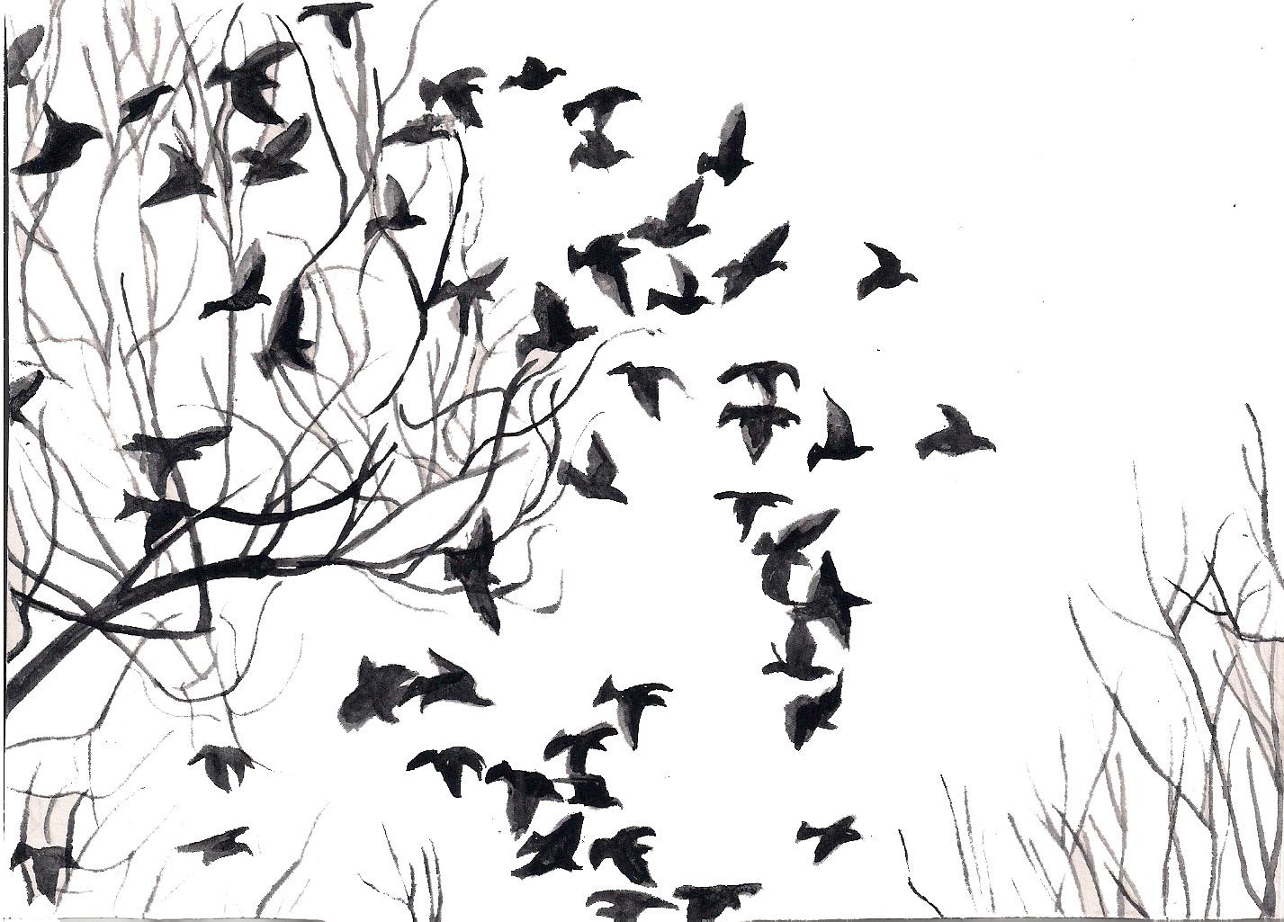 Widescreen Images Collection of Black Bird: Gregorio Inett