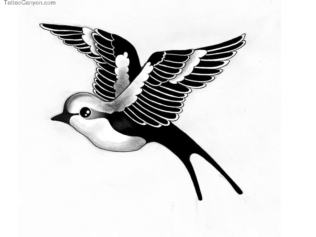 Black And White Bird Wallpapers Group (56+)