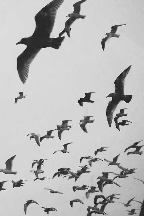 Birds iphone wallpaper | Patterns and wallpapers | Pinterest