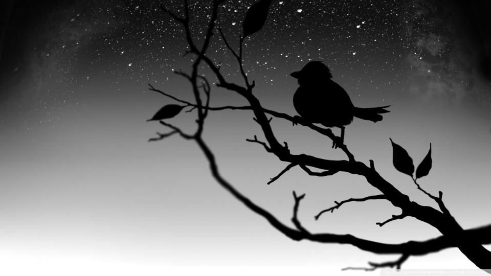 Black Bird HD desktop wallpaper : Widescreen : High Definition