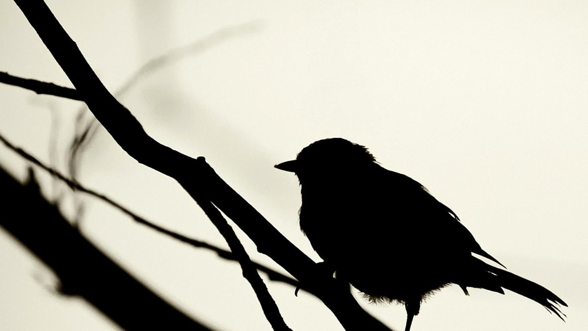 Bird Black And White Wallpaper High Resolution - Bhstorm com