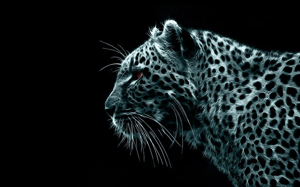 iPhone Cheetah Wallpapers Group (51+)
