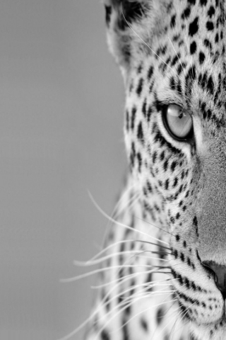 iphone-Black-and-White-Cheetah jpg