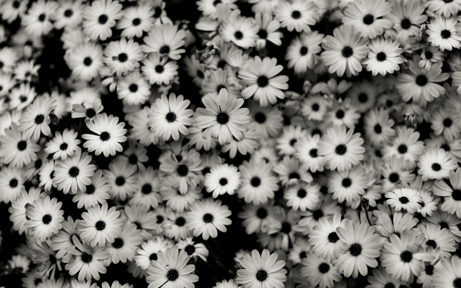 35 HD Black & White Widescreen Backgrounds