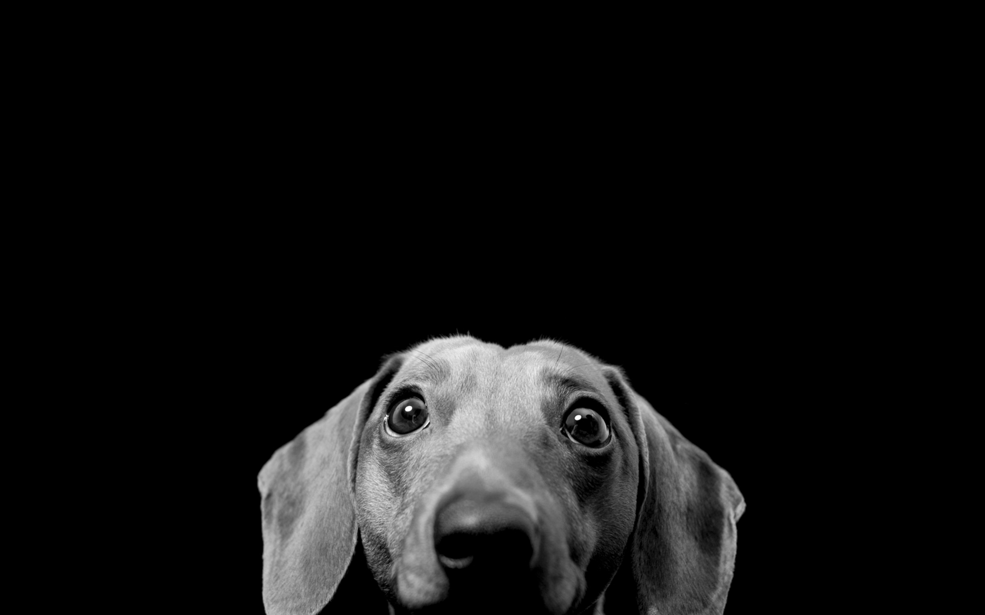 Black And White Dog Wallpapers Mobile - Scerbos com