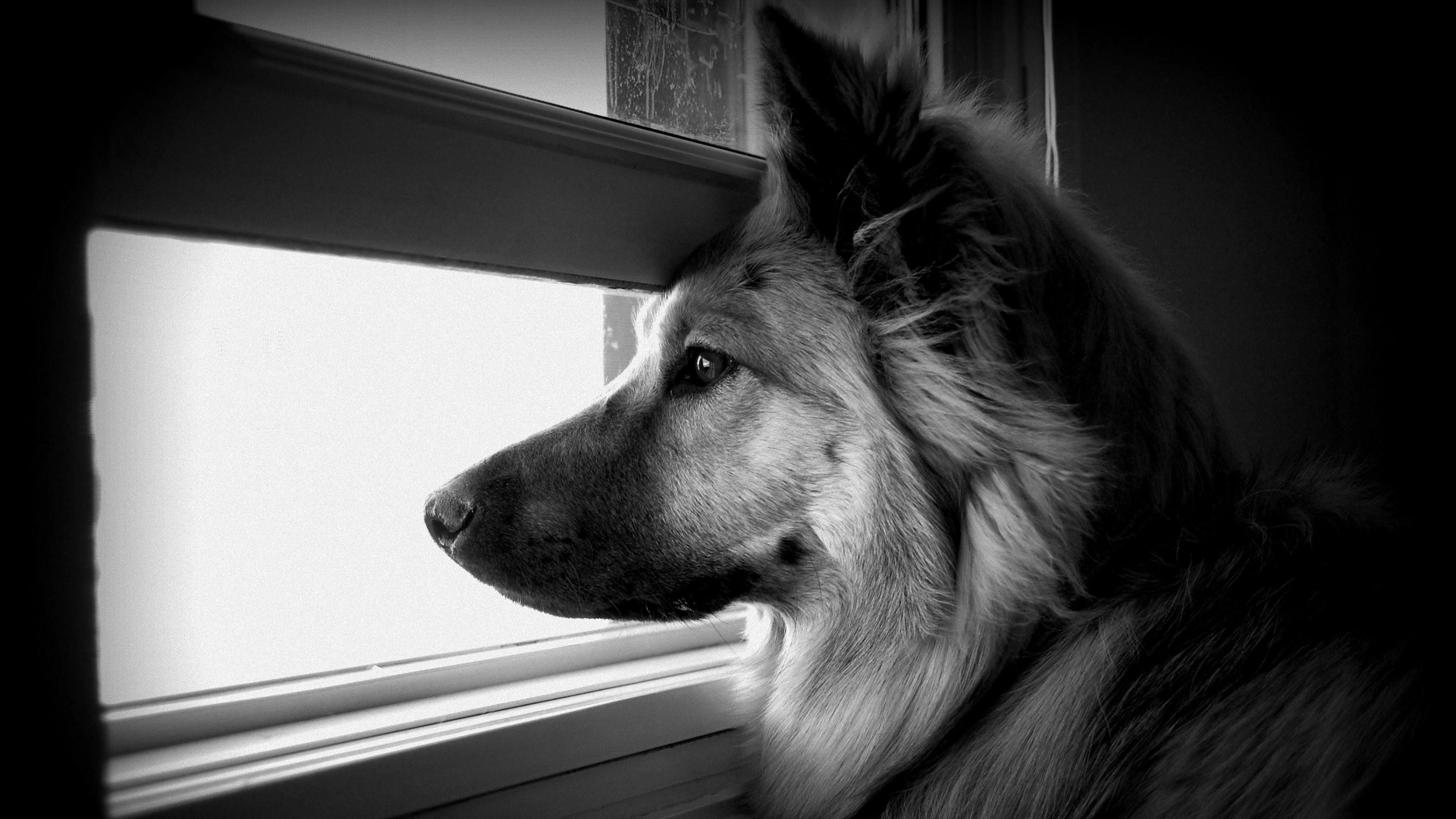 Black And White Dog Wallpaper 1080p ~ Sdeerwallpaper