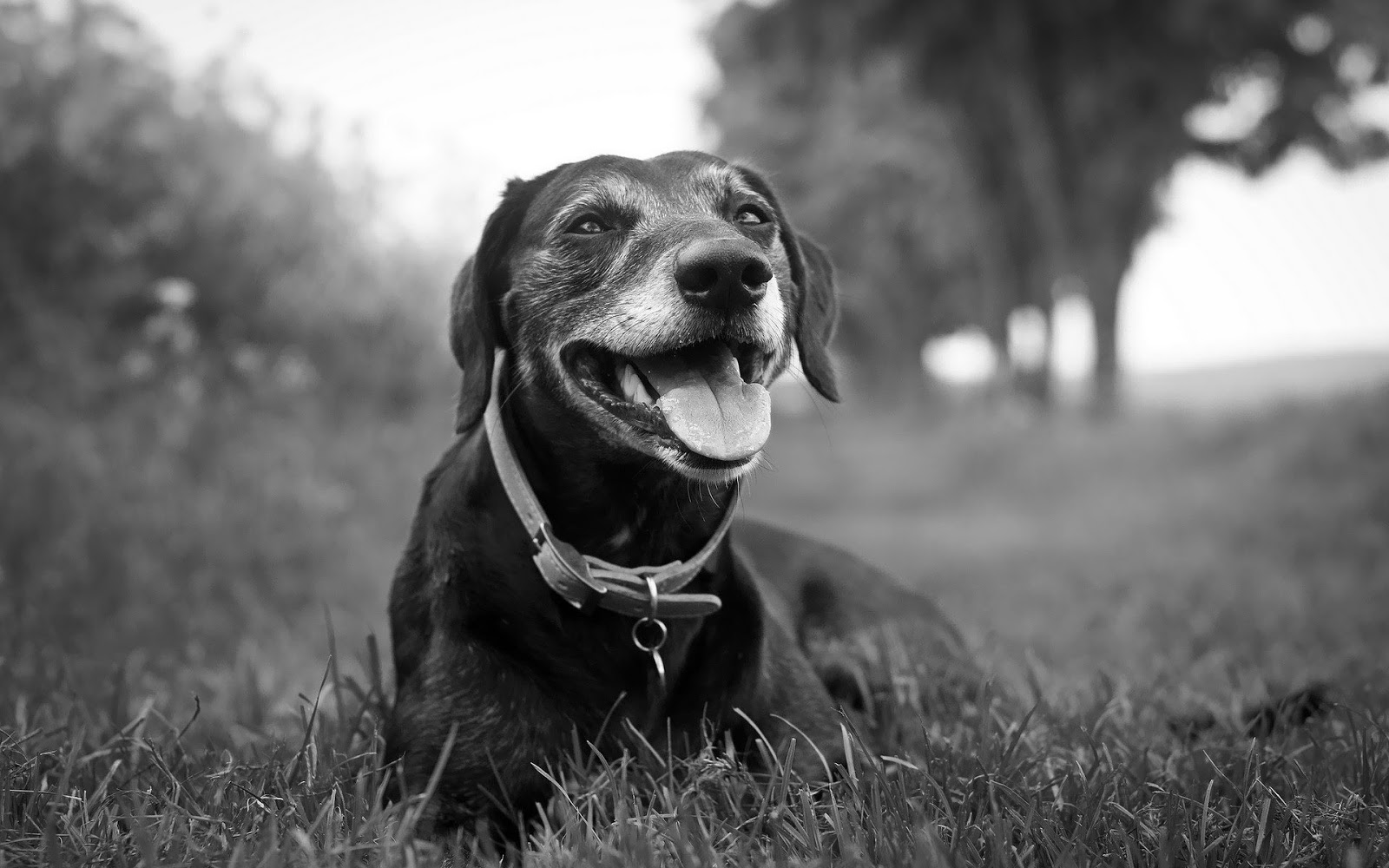 Image Detail for - Black and white wallpaper with a dog | HD