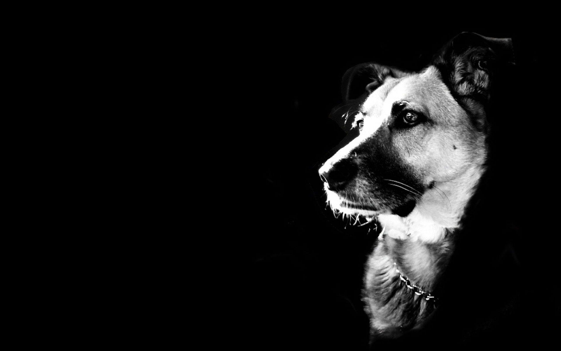 Black And White Dog Wallpaper ~ Sdeerwallpaper