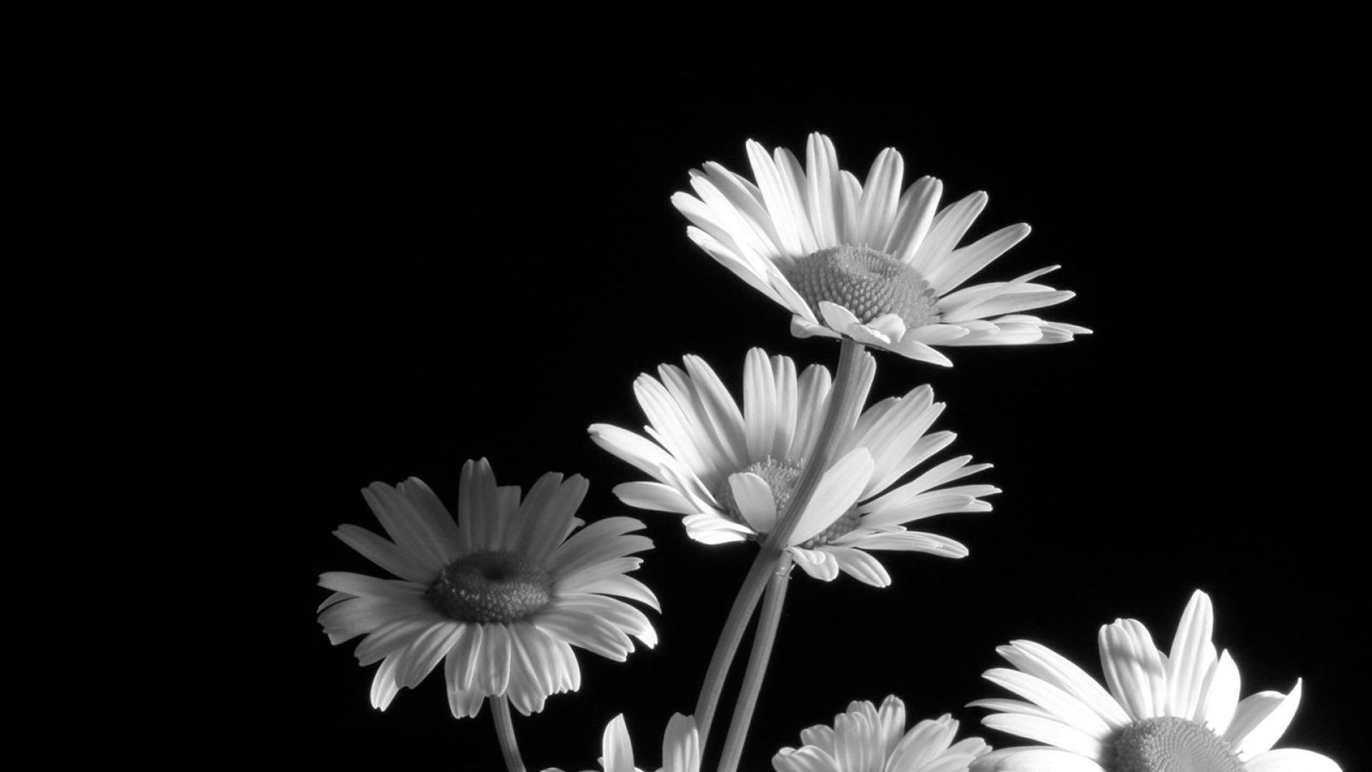 Black And White Flowers Wallpaper Sf Wallpaper