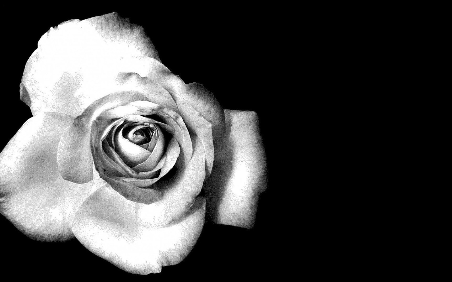 Black and White Flowers wallpaper | 1440x900 | #51484
