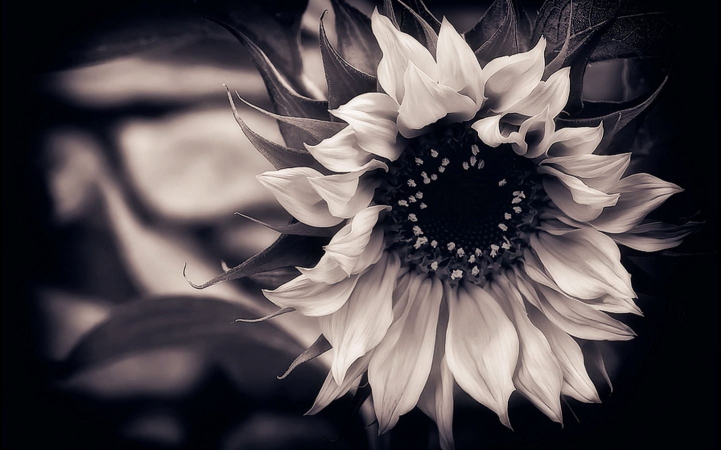 Black Flower Wallpapers Group (68+)