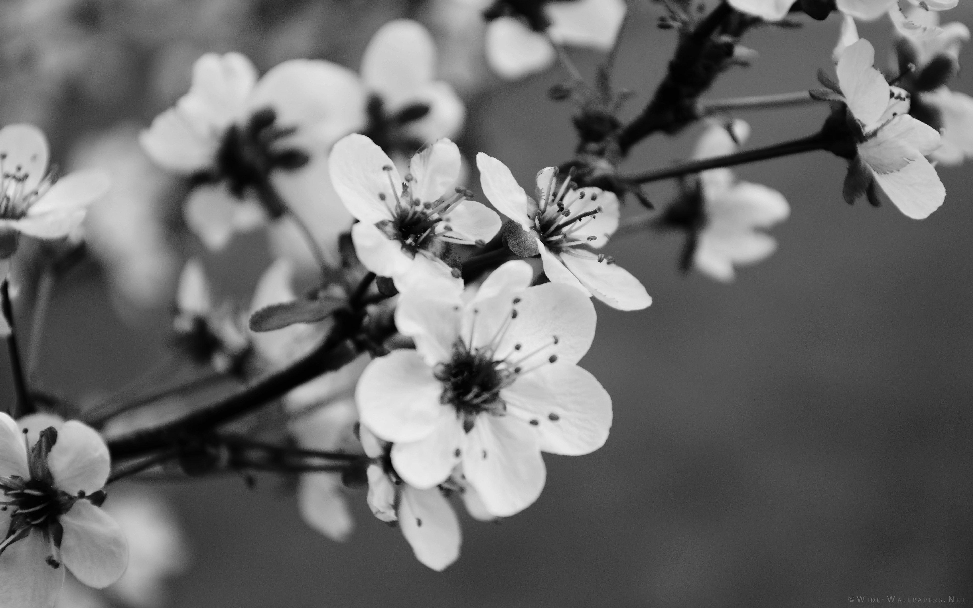 Black and white flower wallpaper 122 lyybj