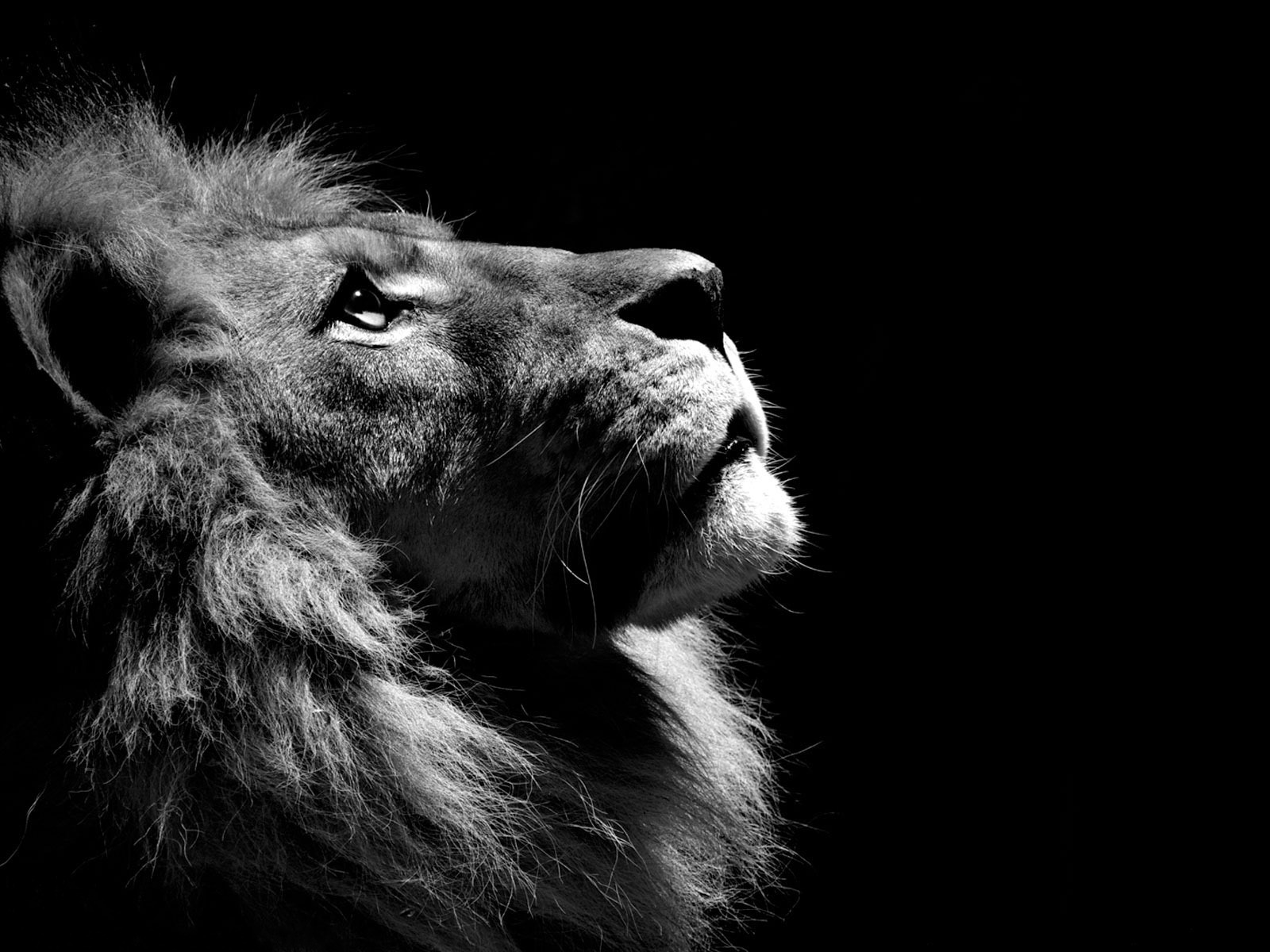 high resolution black and white animal photographs | black and