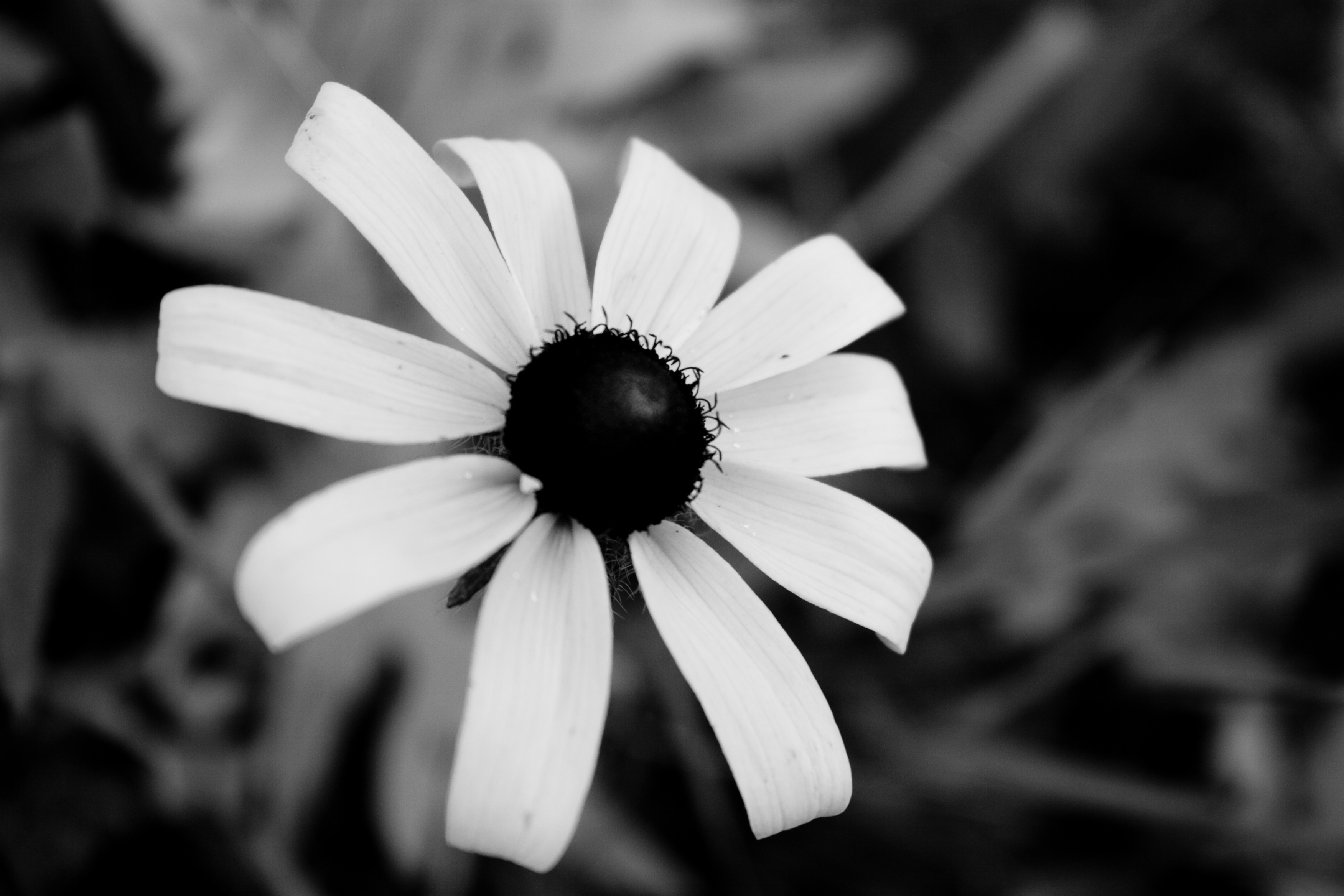 1000+ images about PICTURES OF FLOWERS IN BLACK & WHITE on