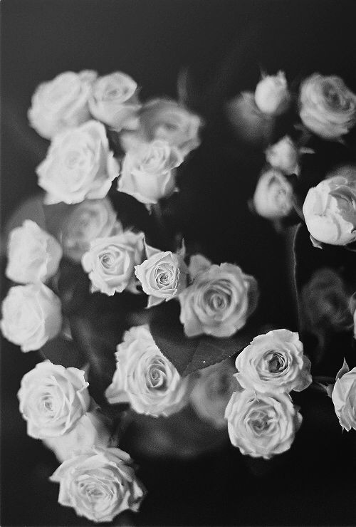 Black and white roses iphone wallpaper | In love | Pinterest