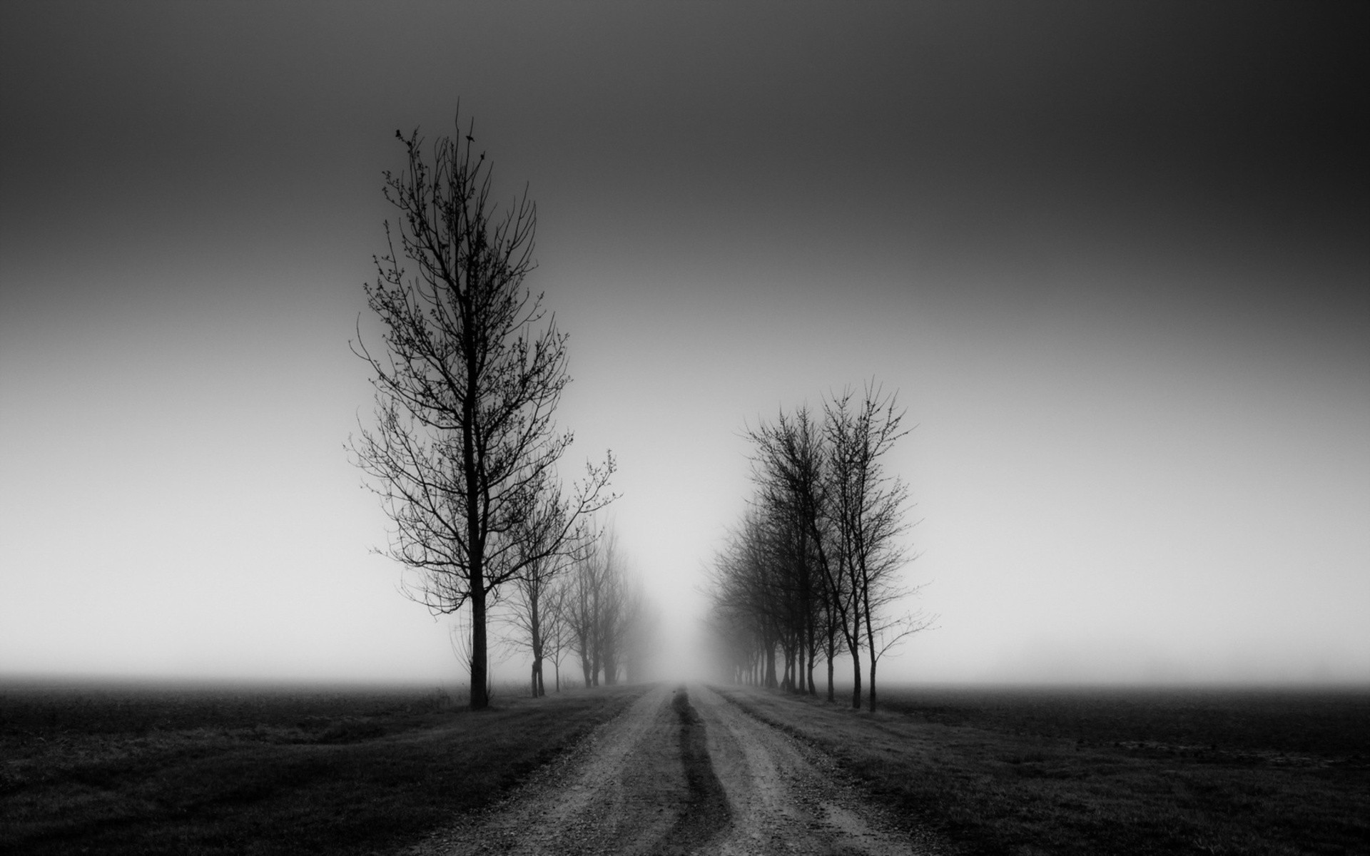 blank and white nature photos | Black And White Trees Nature
