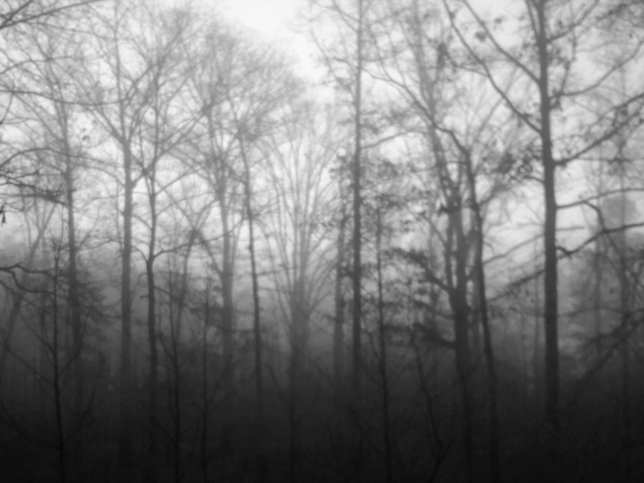 10 best images about black white photography on pinterest