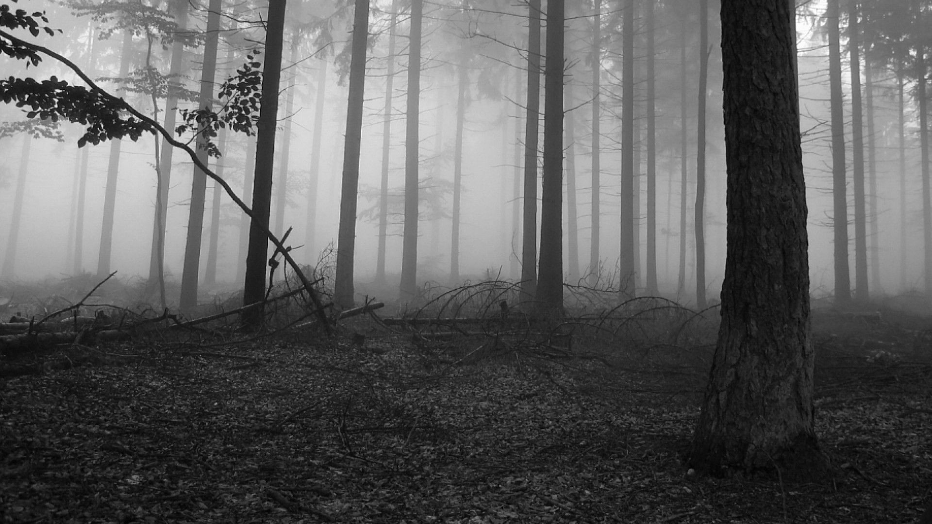 Collection of Black And White Nature Backgrounds on HDWallpapers