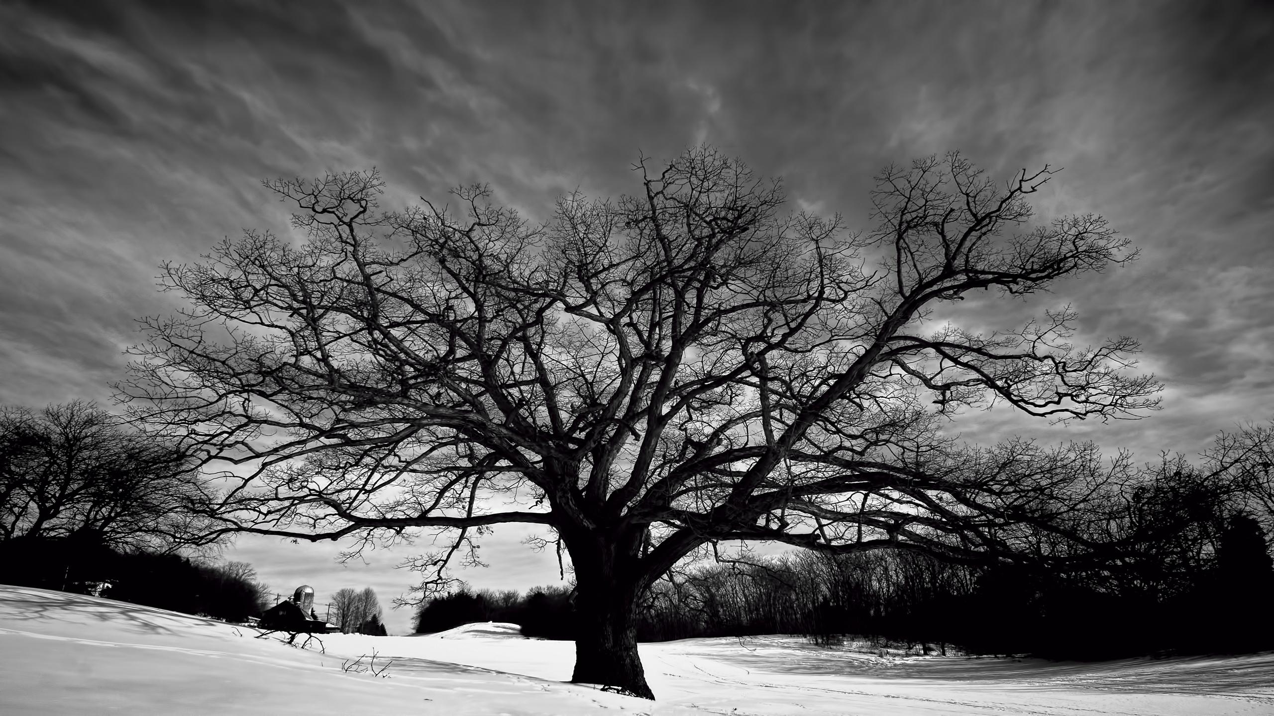 Tree Black and White Free Pc Wallpaper Downloads 4349 - Amazing
