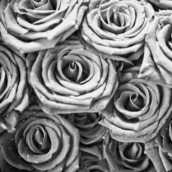 black and white rose wallpaper | Art Inspiration | Pinterest