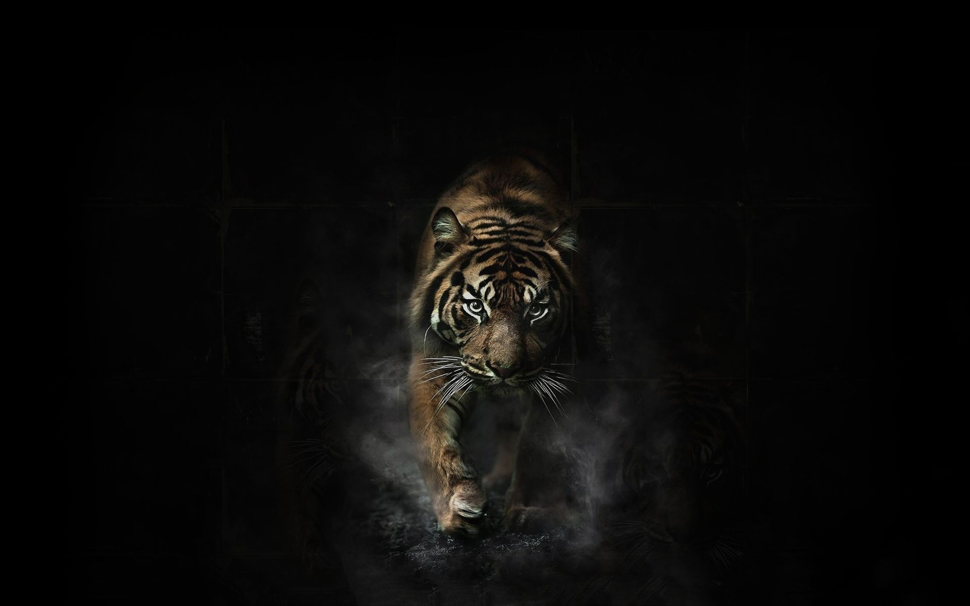 Tiger Wallpapers In HD Group (84+)