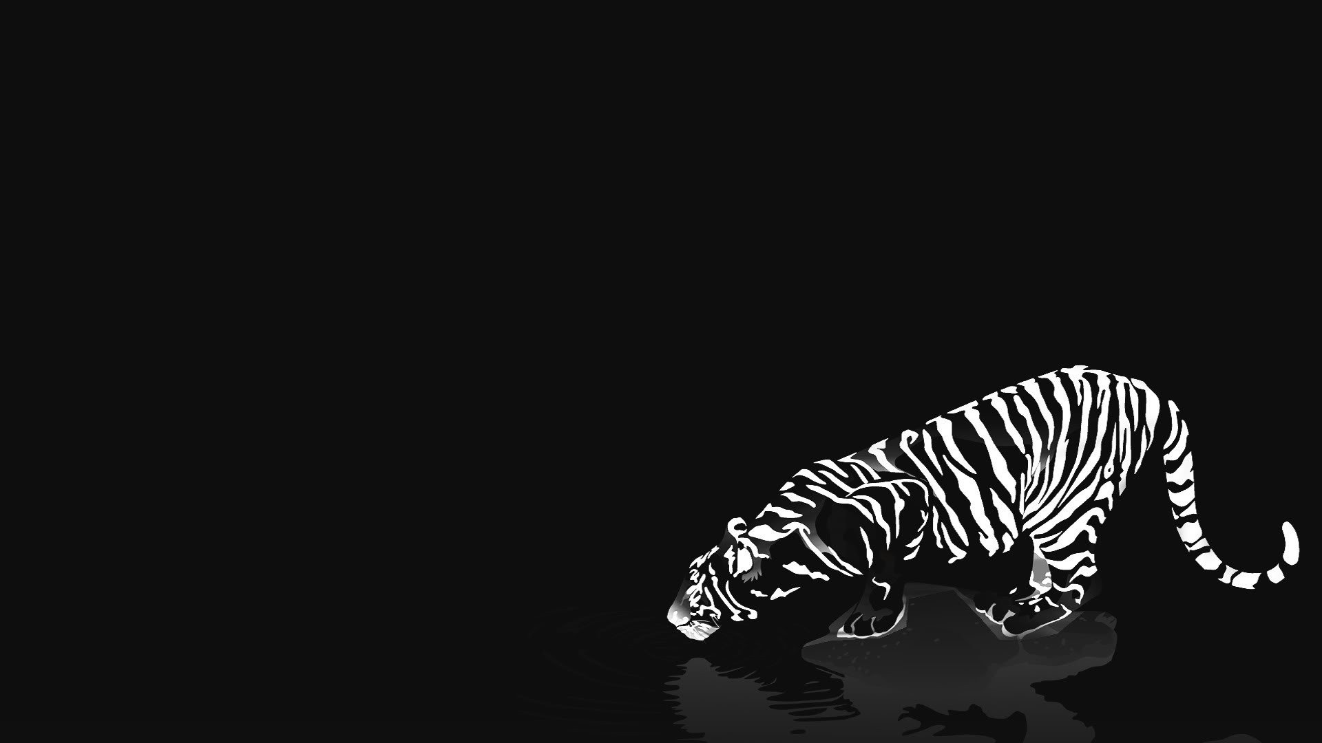 Black and White Tiger Wallpaper - WallpaperSafari