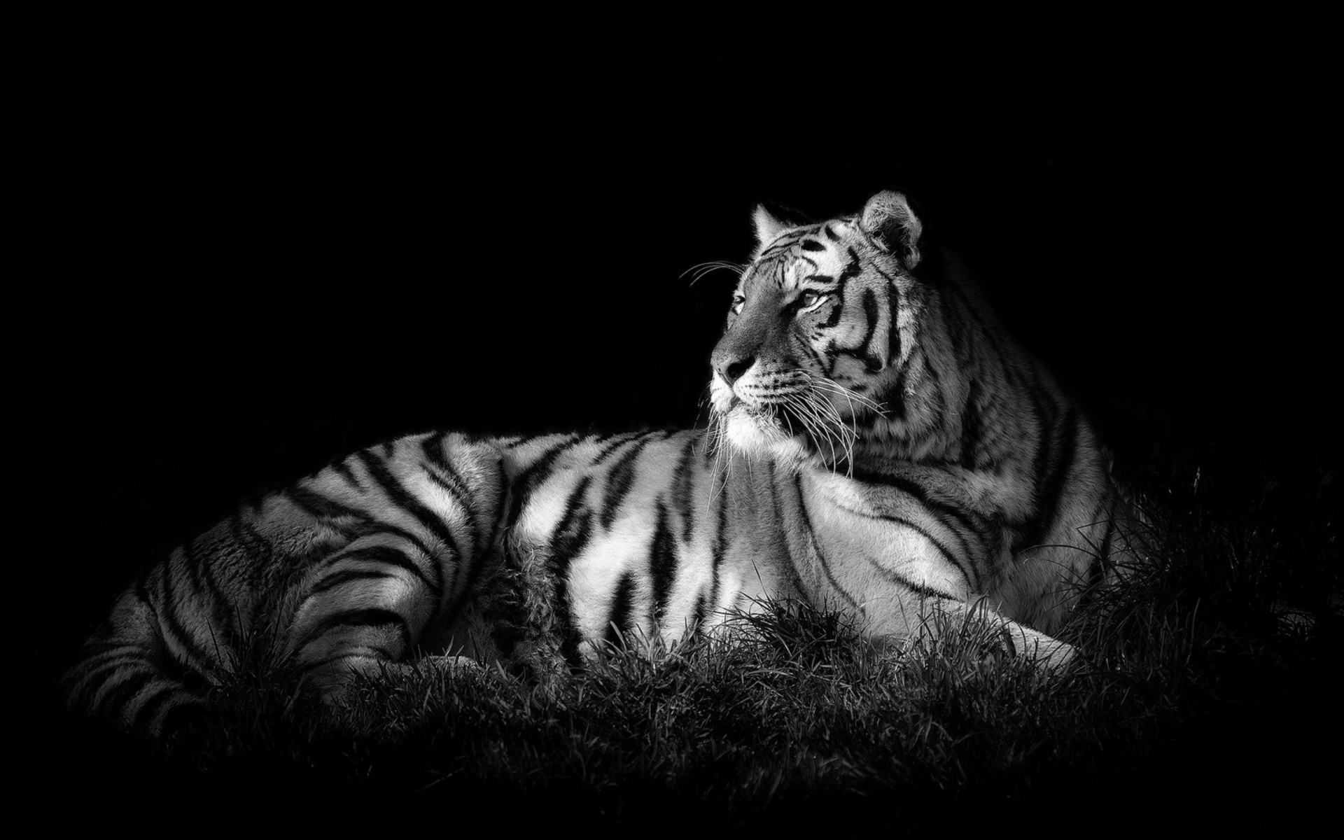 17+ images about Black & White HD on Pinterest | Black backgrounds