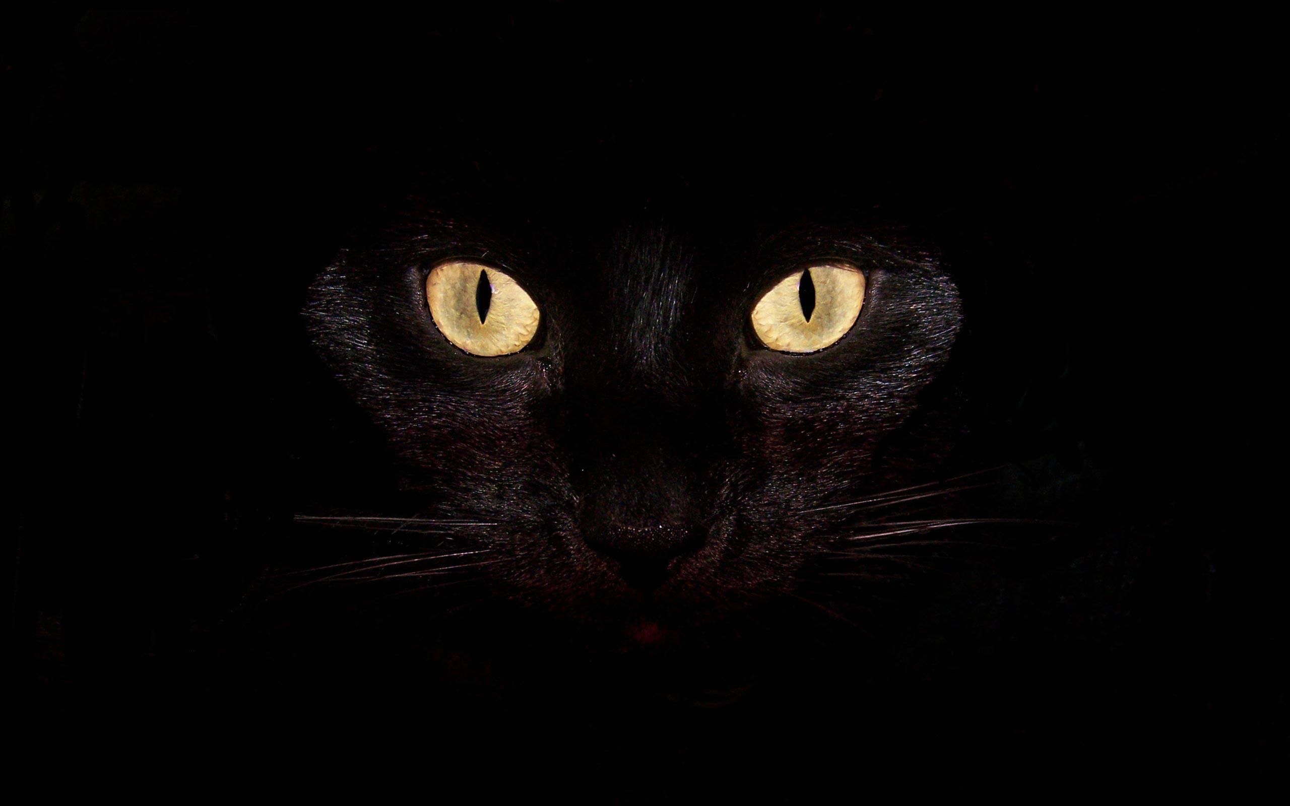 Download Black Cat Desktop Backgrounds Wallpaper | Full HD Wallpapers