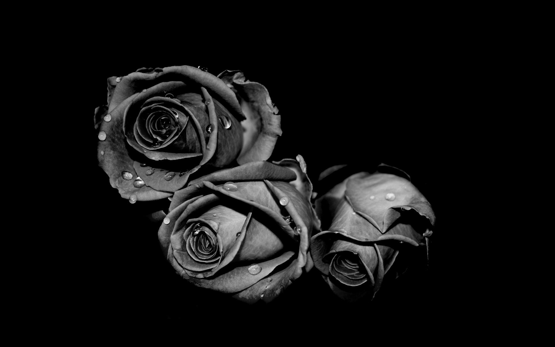 Black and white flowers wallpapers HD | PixelsTalk Net