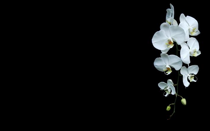Black Flower Wallpaper - WallpaperSafari