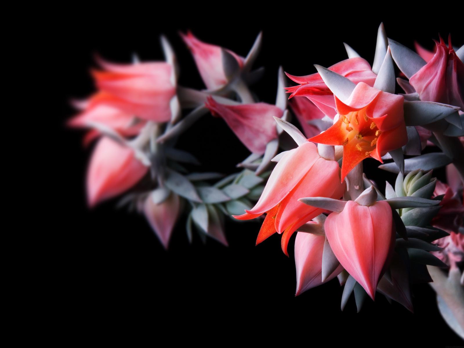 Flowers in Black Wallpapers   HD Wallpapers