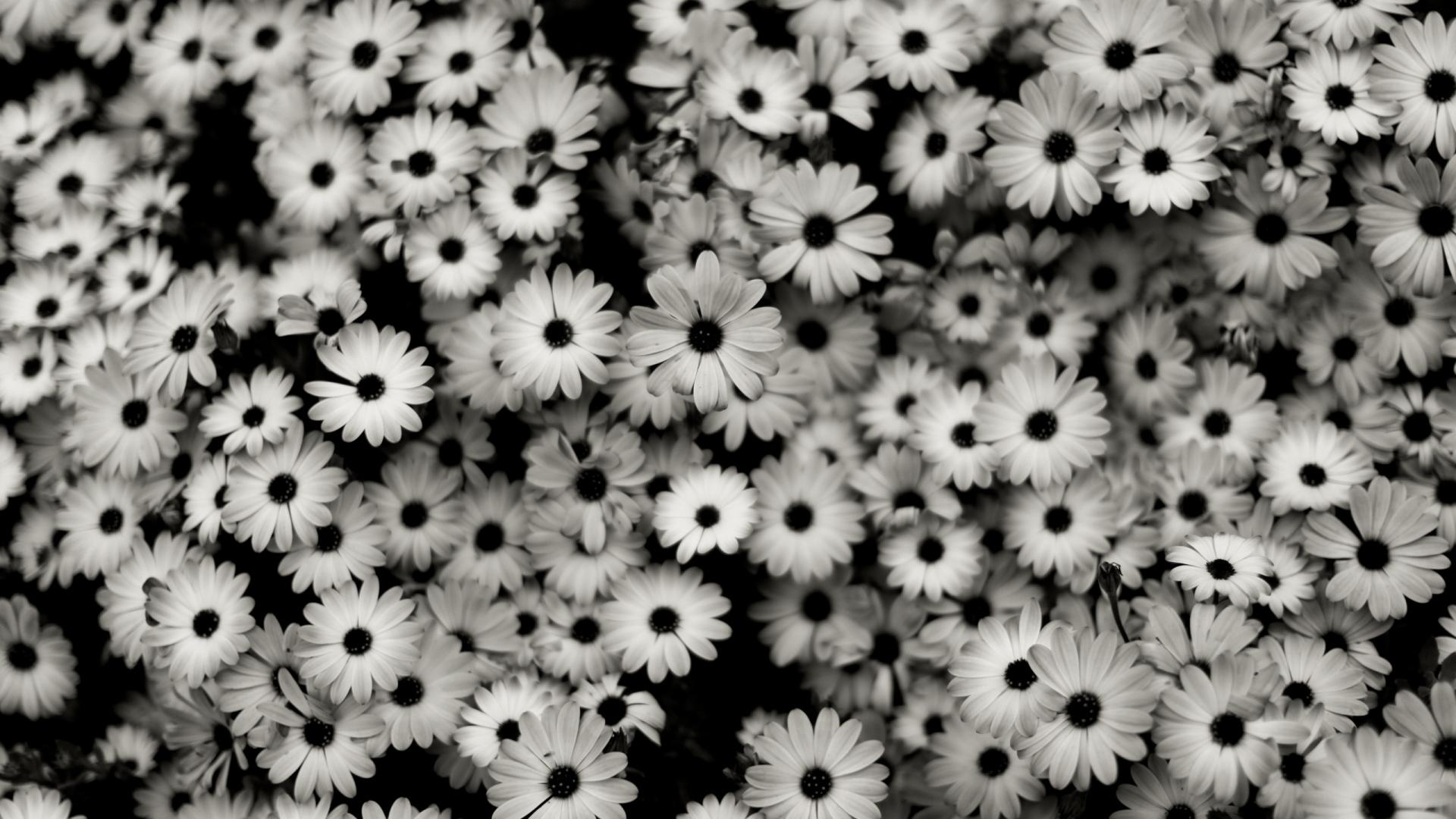 Full HD 1080p Flowers Wallpapers, Desktop Backgrounds HD Downloads
