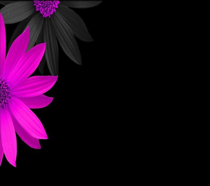 Black Flower Wallpapers Sf Wallpaper