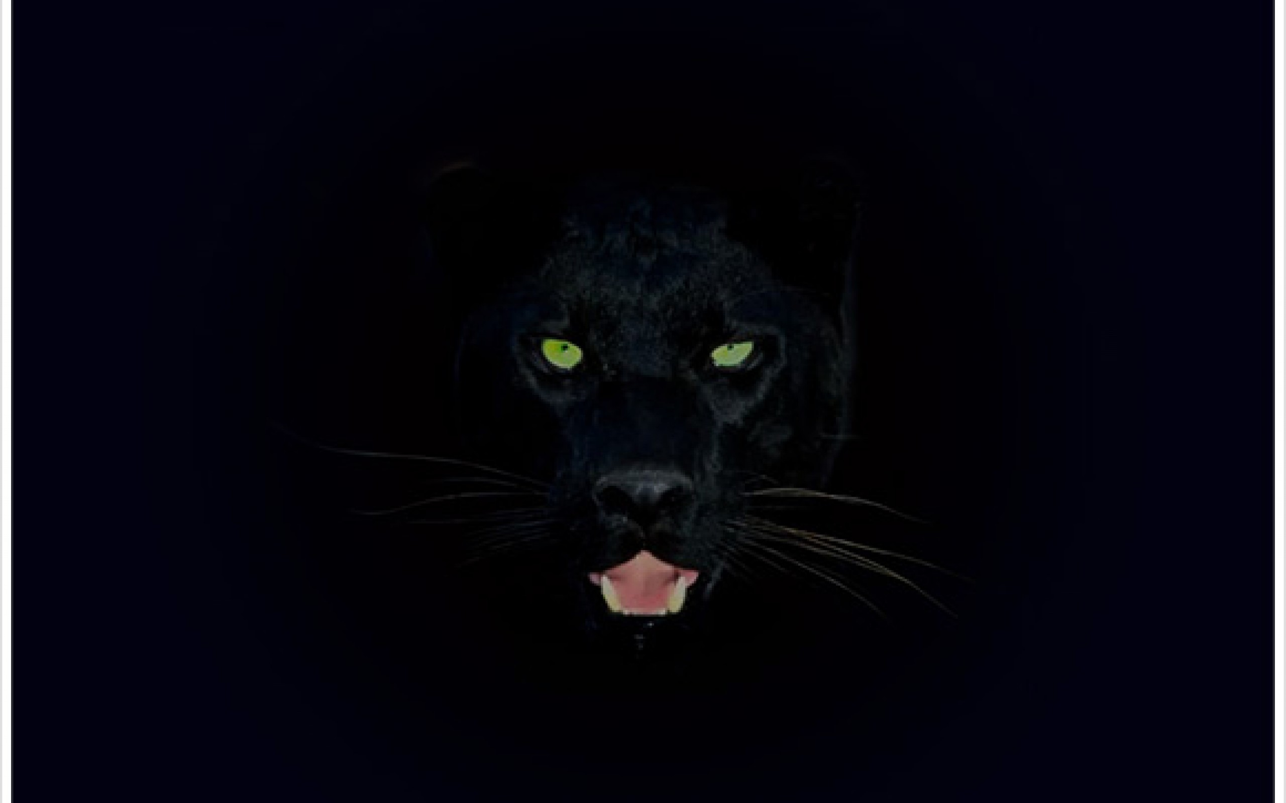 Panther Wallpapers Group (81+)