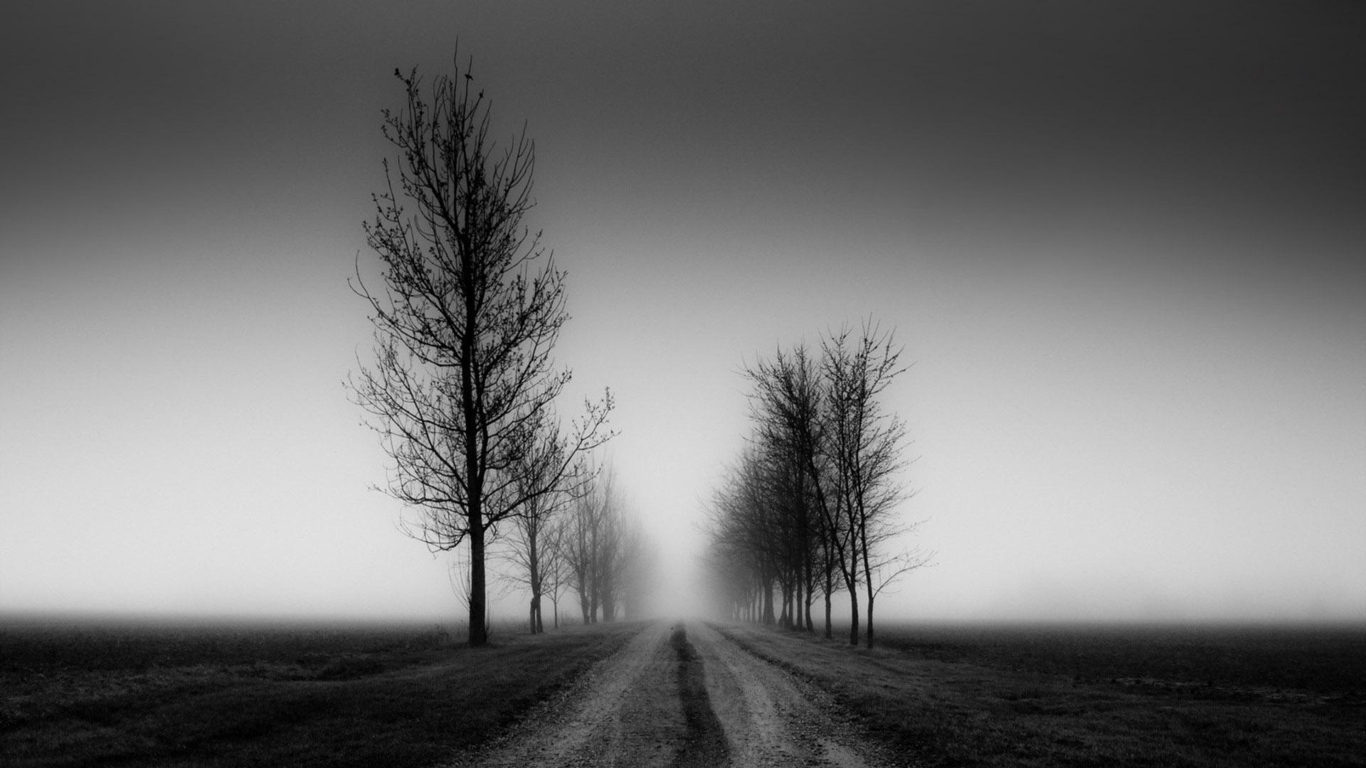 Nature landscapes trees fog black sky mood wallpaper   1920x1080