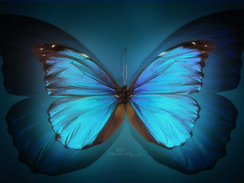 Butterfly Desktop Wallpaper - Free Mobile Wallpaper Desktop