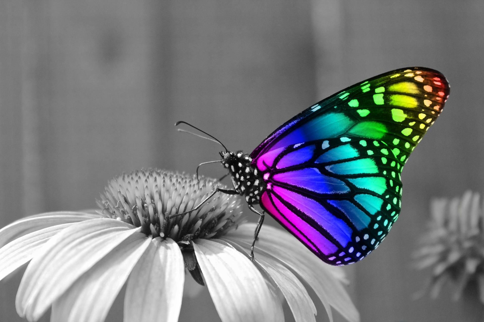 Butterflies Desktop Wallpaper