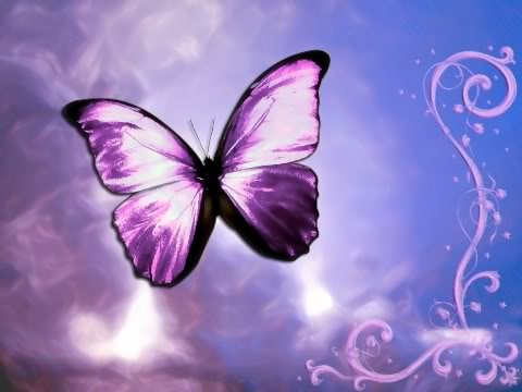 Collection of Butterfly Desktop Backgrounds on HDWallpapers