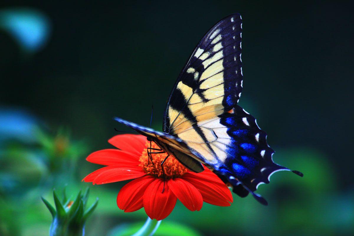 Collection of Butterflies Desktop Wallpaper on HDWallpapers