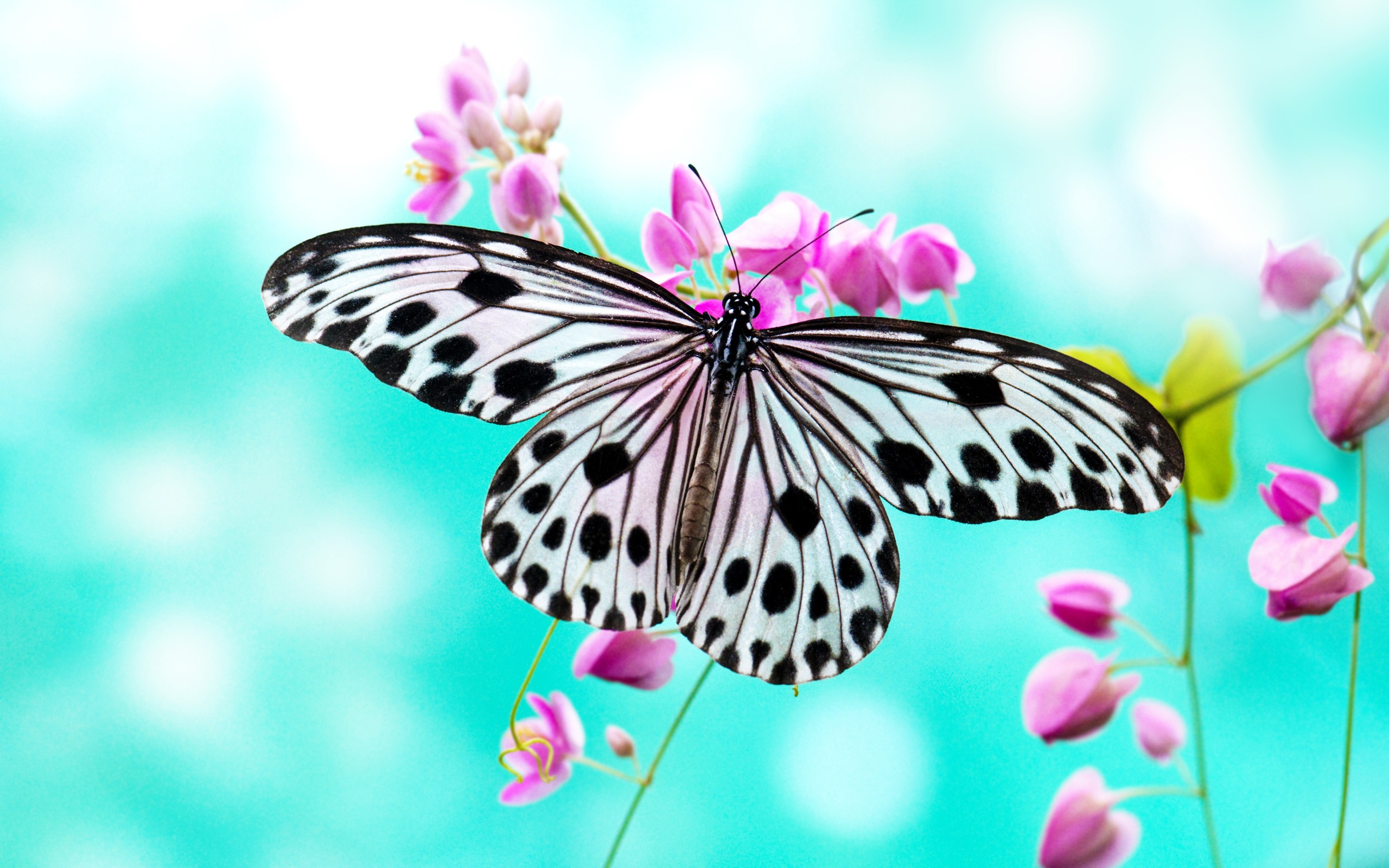 1182 Butterfly HD Wallpapers | Backgrounds - Wallpaper Abyss