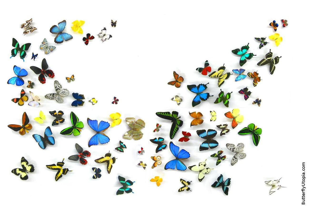 Free Butterfly Wallpaper, Wallpapers, Backgrounds, Desktop
