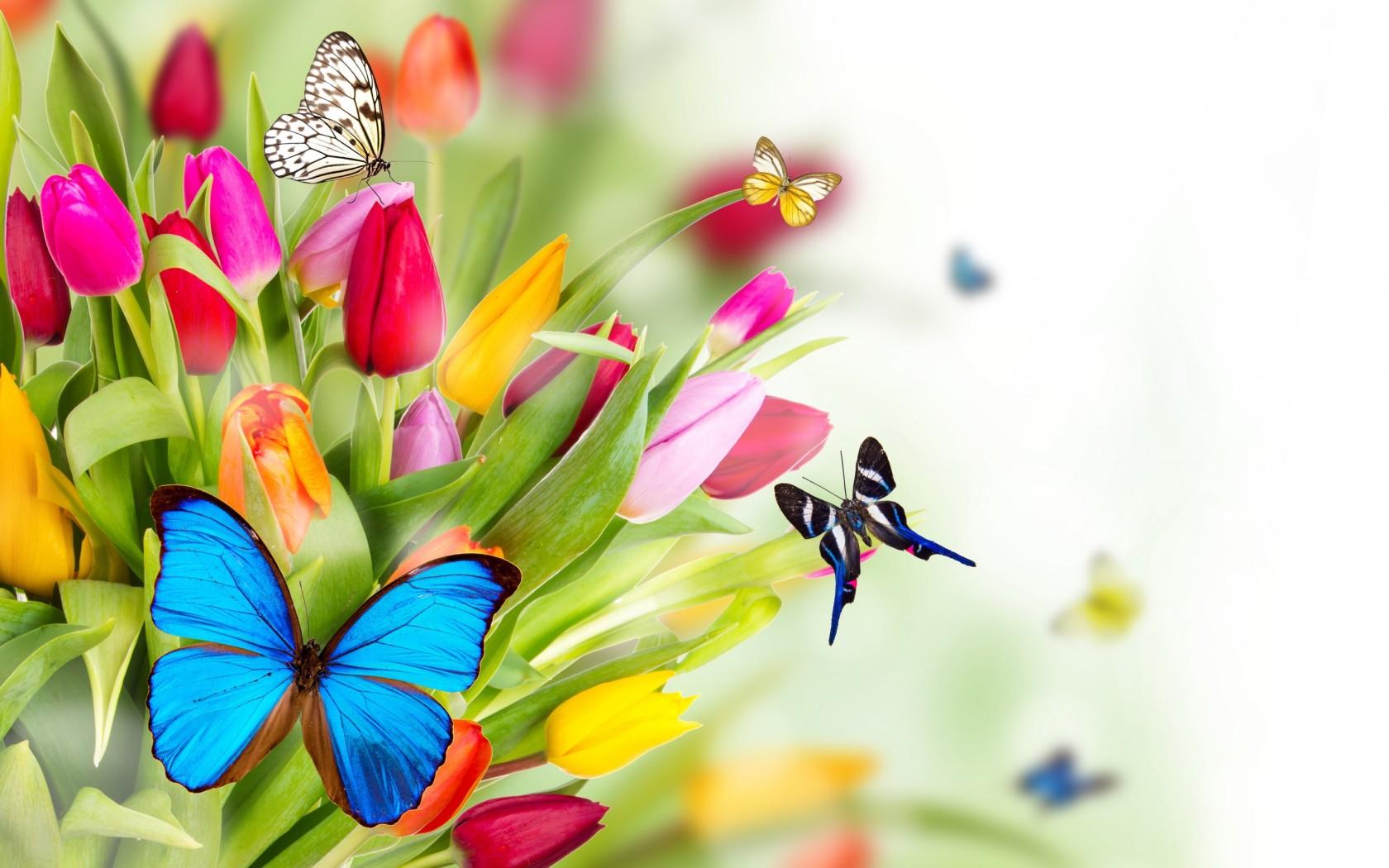 1024x768px Butterflies Wallpaper Full HD | #323143