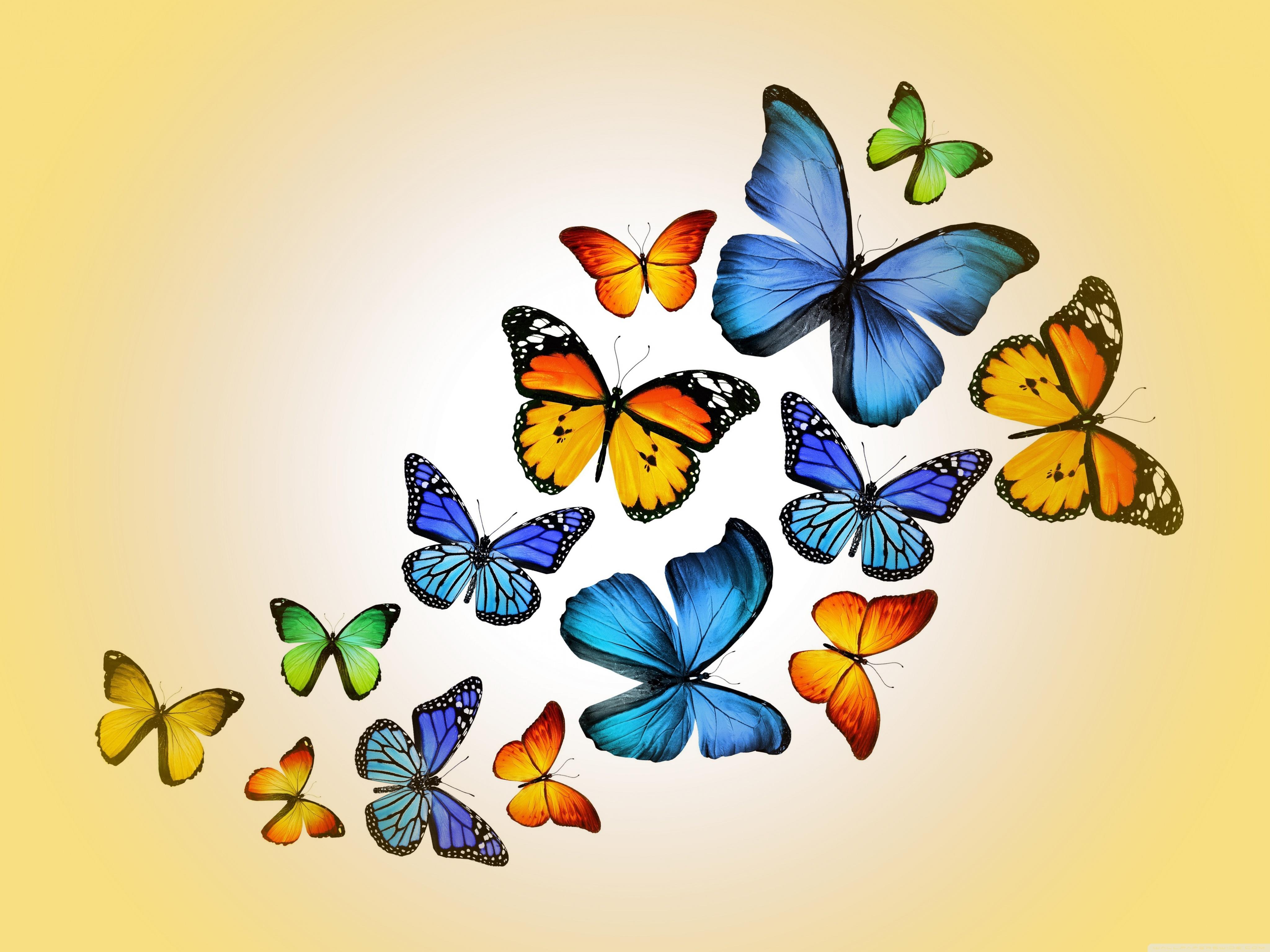 Butterflies HD desktop wallpaper : Widescreen : High Definition