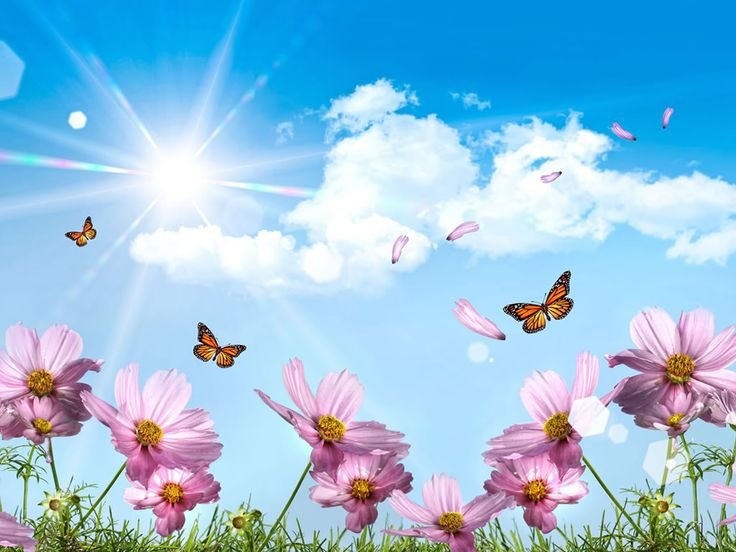 images of flowers and butterflies | flowers flowers wallpaper