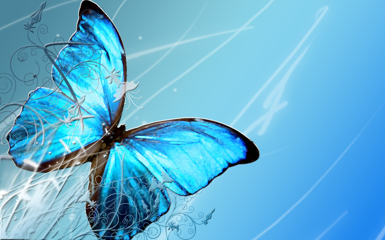 1000+ images about butterflies on Pinterest | Desktop backgrounds