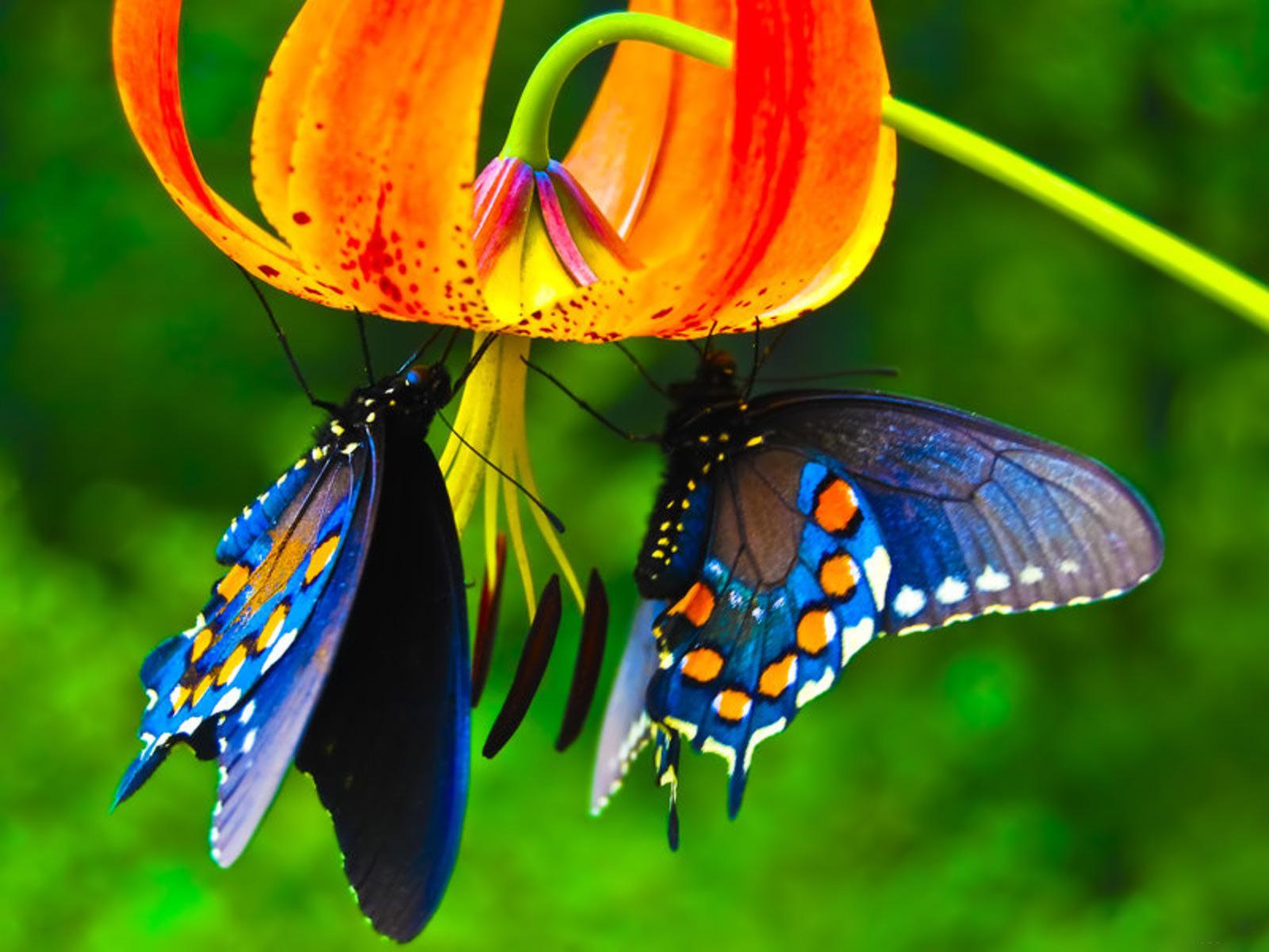Butterfly Desktop Wallpapers - THIS Wallpaper