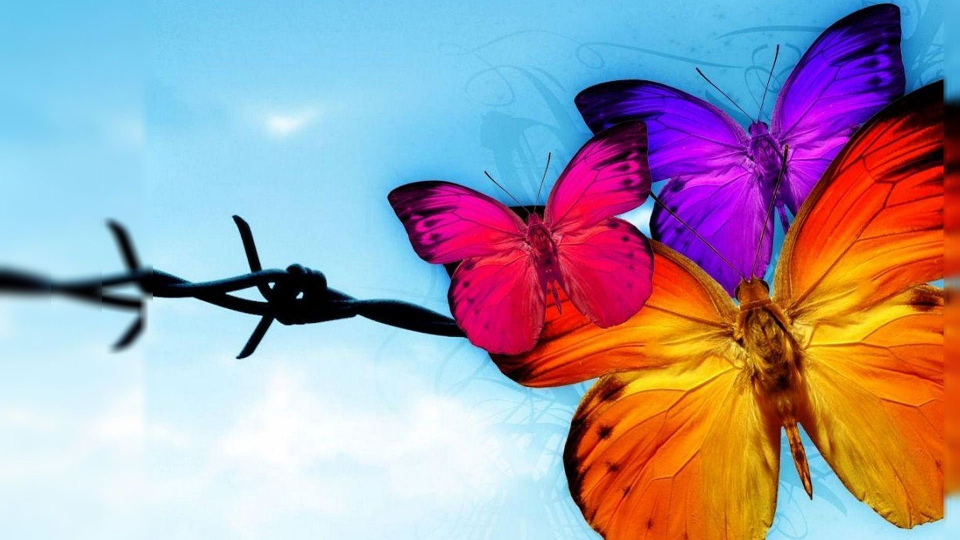 Free Butterfly Wallpapers - Wallpaper Cave