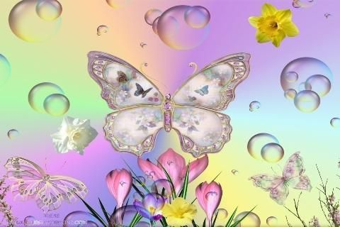 Butterfly Live Wallpapers HD Download - Butterfly Live Wallpapers