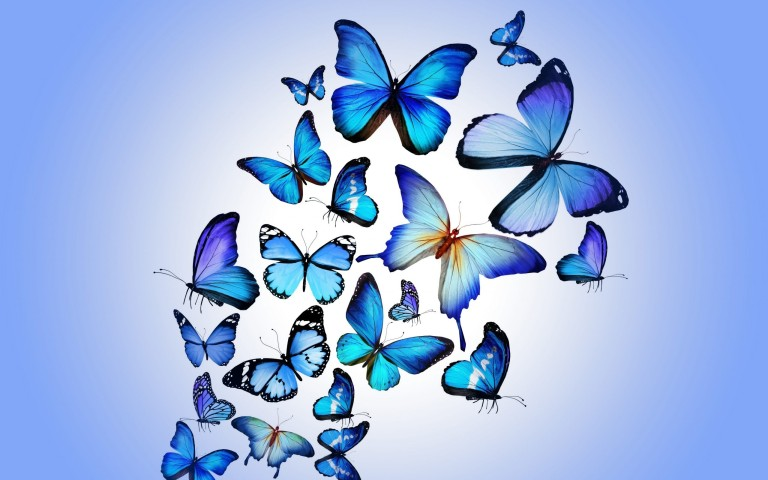 Collection of Butterflies Wallpapers Free Downloads on HDWallpapers